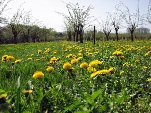 meadow-409287_640_gabrielemlink_pixa