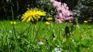 meadow-43467_1280_beeki_pixa