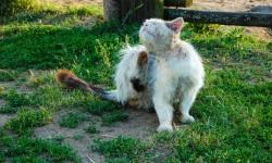 Katze Flöhe