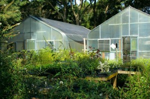 greenhouse-60830_1280_JamesDeMers_pixa