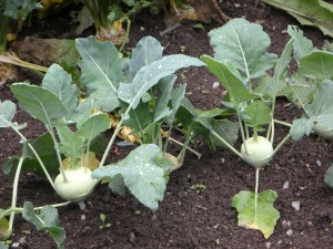 Biopflanzen aus dem Internet