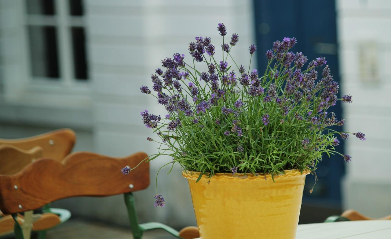 Mückenschutz Lavendel anstattdessen.de