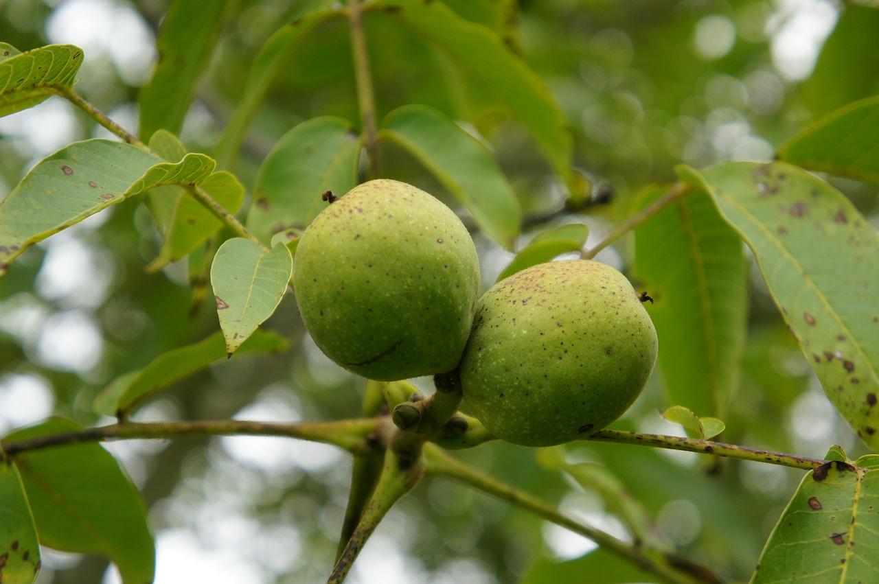 Mückenschutz Walnussbaum anstattdessen